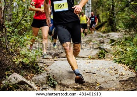 woods stock photos royaltyfree images  vectors
