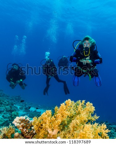 Group of SCUBA Divers over green soft coral on a coral reef