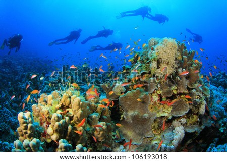 Group of Scuba Divers swim over a coral reef in the Red Sea - stock photo
