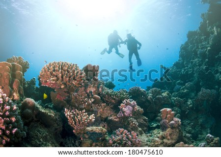 Group of Scuba Divers Underwater at the coral reef. - stock photo