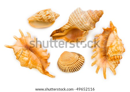 Group of sea conches isolated on white background - stock photo