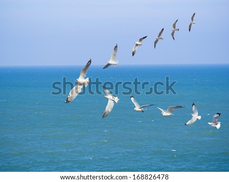 Group of sea gulls against blue sky and sea