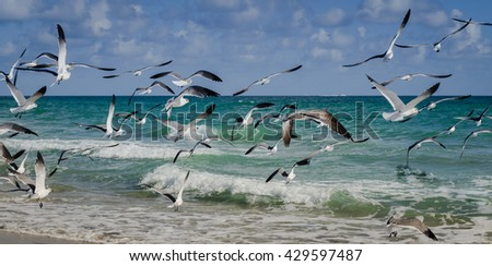 Group of seagull flying on the beach