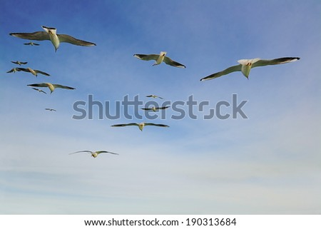 Group of seagulls flying into the sky - stock photo