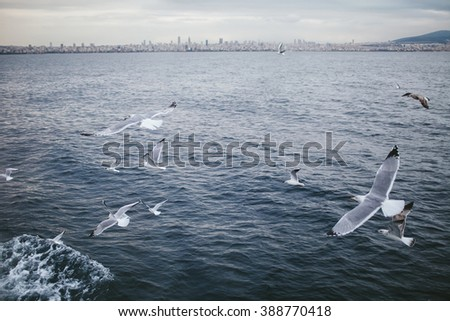 Group of seagulls flying over the sea