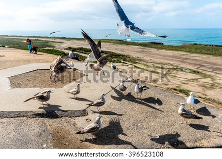 Group of seagulls struggle for a piece of food on the beach