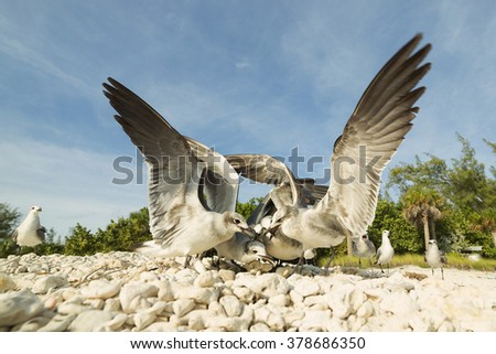 Group of seagulls struggle for a piece of food on the beach, close-up view of the head. - stock photo