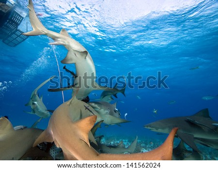 Group of sharks under boat - stock photo