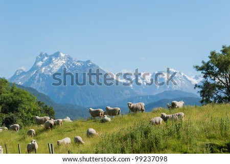 Group of sheep with snow mouintain in background - stock photo