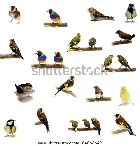 Group of  small birds on the white background - stock photo