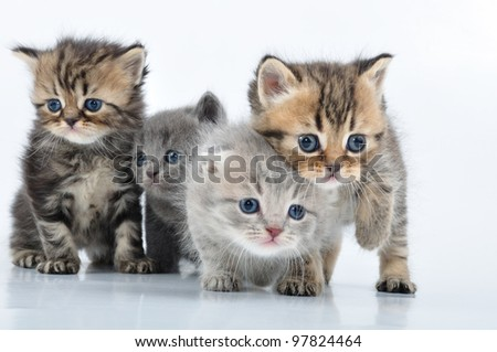 group of small 3 weeks old kittens walking towards - stock photo