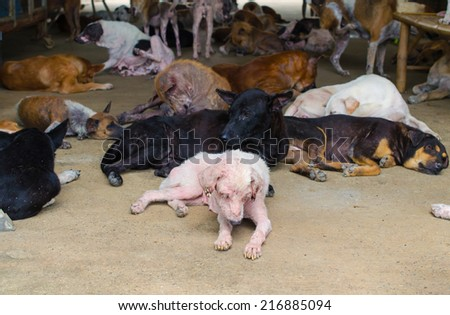Group of stray dogs in Foundation. - stock photo