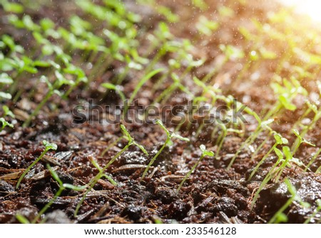 Group of the beginnings in soil, Artistic selective focus - stock photo