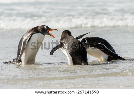 Group of the penguins in the Atlantic Ocean - stock photo