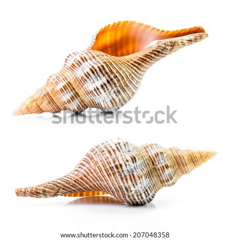 Group of the sea shell isolated on white