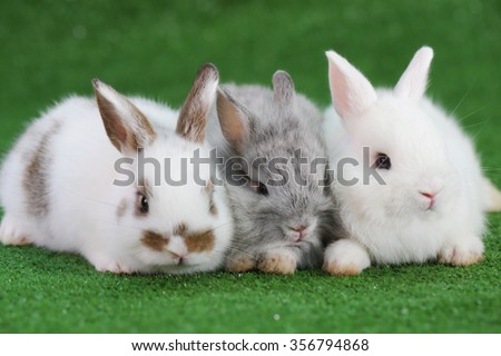 Group of three baby rabbit on green grass - stock photo