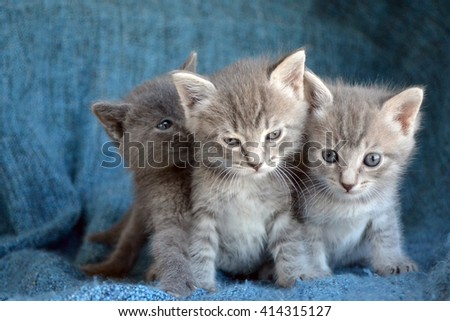 Group of three grey striped tabby kittens, with one looking grumpy or mad