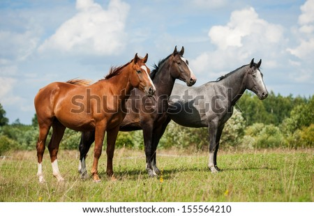 Group of three horses standing on the pasture - stock photo