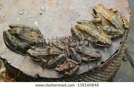 group of toads sitting on a metal plate - stock photo