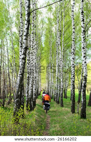Group of traveling cyclists crossing Birch-tree alley at spring forest - stock photo