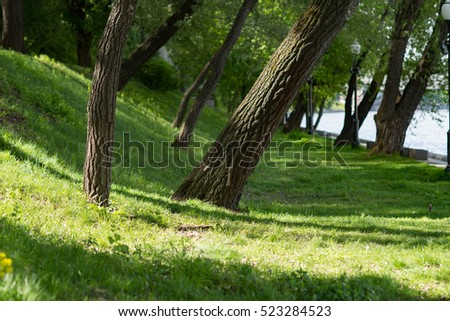 Group of trees in park, Moscow, Russia