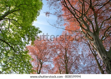 Group of trees on a blue sky. Summer Landscape.