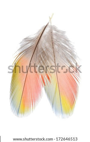 Group of 2 tricolor Real MACAW bird Feathers. Natural colors: Red, Yellow, and Blue. Isolated on white background.