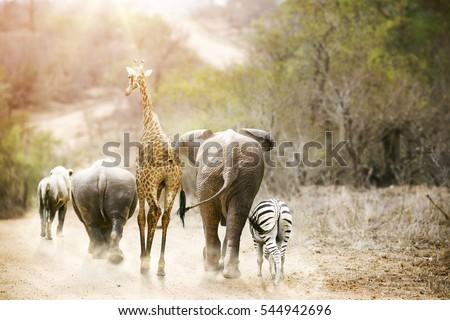 group animal