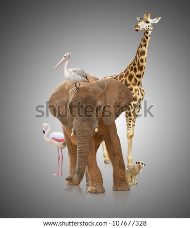 Group Of Various Animals On Grey Background - stock photo