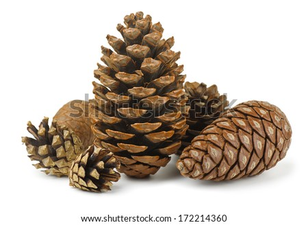 Group of various conifer cones isolated on white - stock photo