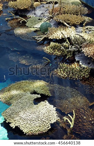Group of various corals in the Lisbon Oceanarium, Portugal. Coral reef. - stock photo