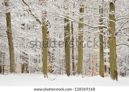 Group of white snow covered trees in winter in a local park - stock photo