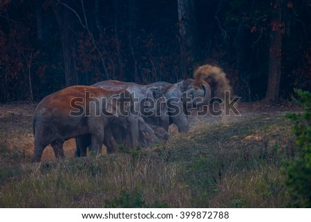 Group of Wild elephants (Elephas maximus) with one of them spay the salt lick in real nature in the evening at Khaoyai national park, Thailand - stock photo