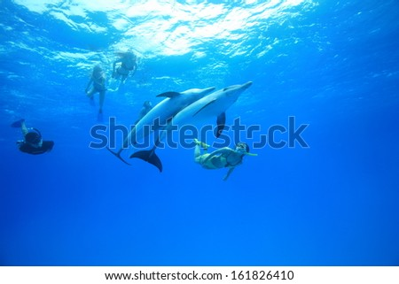 Group of women diving with dolphins underwater - stock photo