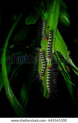 Group Worms On Grass Garden Flash Stock Photo 645565300 - Shutterstock