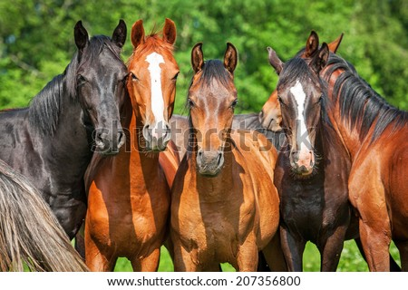 Group of young horses on the pasture - stock photo