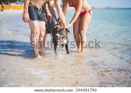group of young multiethnic friends women and men at the beach in summertime having fun playing with dog in the water - stock photo