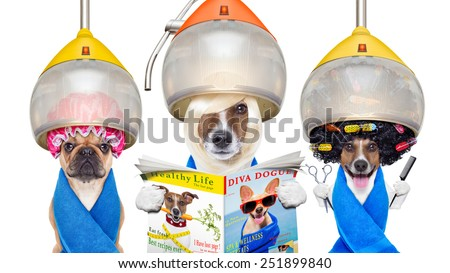 group or team of dogs at the groomer or hairdresser, under  drying hood,holding  scissors ,hair comb, reading a magazine, isolated on white background - stock photo