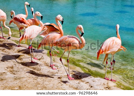 Group pink flamingos in zoo - stock photo