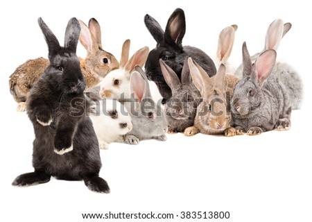 Group rabbits sitting together isolated on white background - stock photo