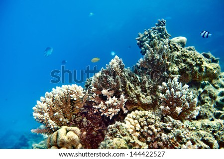 Group scuba diver  in  blue water.