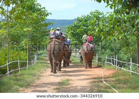 Group tourists to ride on an elephant in forest at Chiang mai, thailand