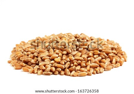 Group treated wheat grains isolated on a white background. - stock photo