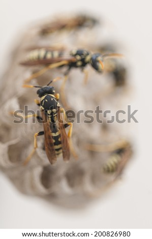 Group wasps building a nest - stock photo