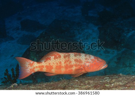 Grouper fish - stock photo