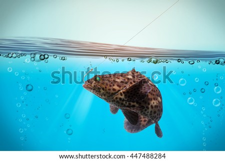 grouper fish hooks feeling under the sea/Arabian grouper, Greasy grouper/Epinephelus tauvina/Serranidae /grouper fish isolated on black background/fish market popular  - stock photo