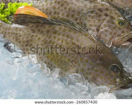 grouper fish on top of ice - stock photo