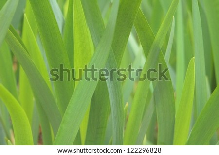 Grouping of flower leaves - stock photo