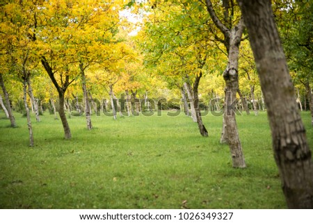 grove of trees in the autumn