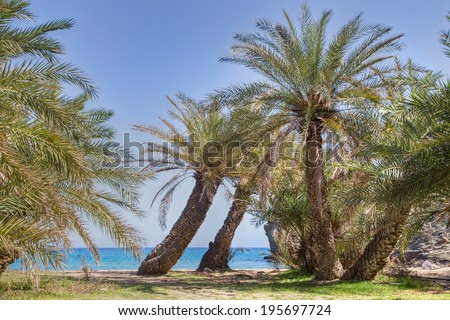 Grove of tropical palm trees growing on a beach with a view of a calm blue ocean symbolic of summer vacations and travel - stock photo